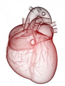 Heart visual
